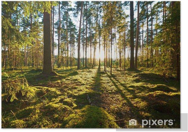 Plakat Wschód słońca w sosnowym lesie - iStaging