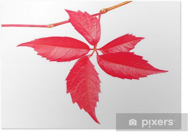 Plakat Wspinaczka winorośli - Pory roku