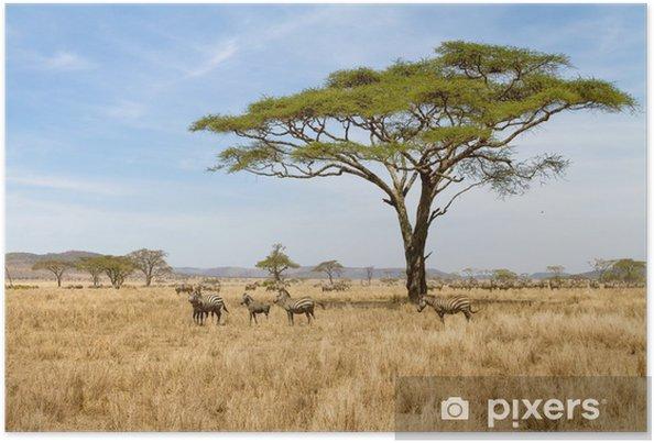 Plakat Wypas Zebra w Serengeti - Tematy