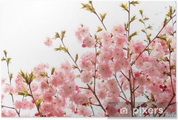 Plakát Yae Sakura - Květiny