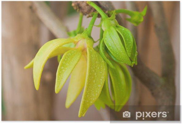 Plakat Ylang-ylang kwiaty na drzewie, Tajlandii - Kwiaty