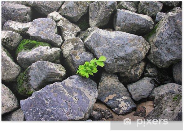 Plakat Z kamienia - Drzewa