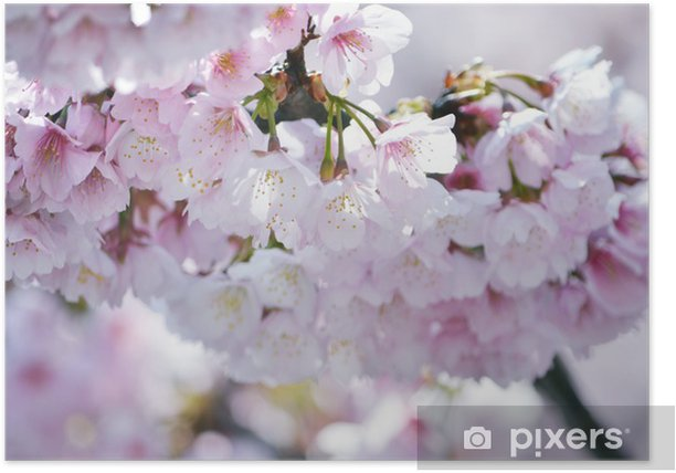 Plakát Z Kanzakura - Roční období