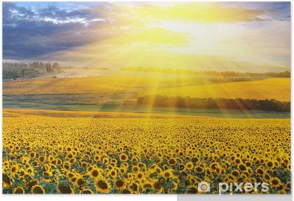Plakat Zachód słońca nad pola - Przeznaczenia