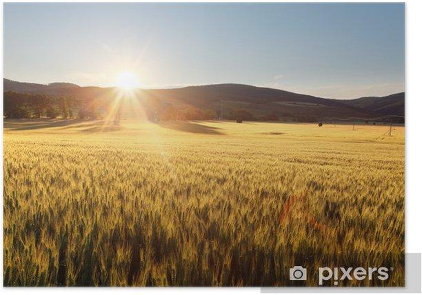 Plakat Zachód słońca nad pole pszenicy. - Tematy