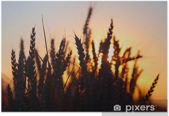Plakat Zachód słońca nad pole pszenicy. - Rolnictwo