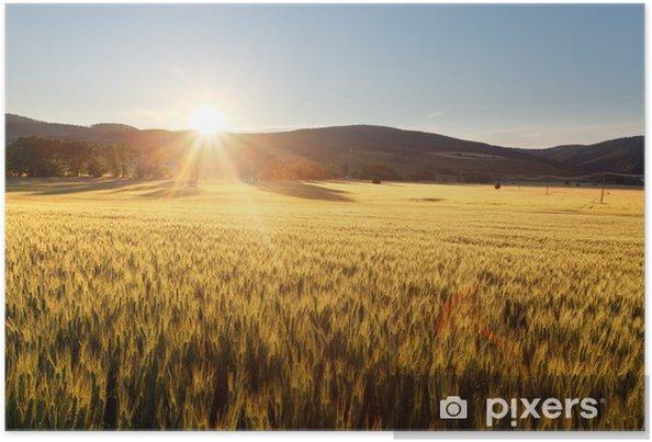 Plakát Západ slunce nad pšeničné pole. - Témata