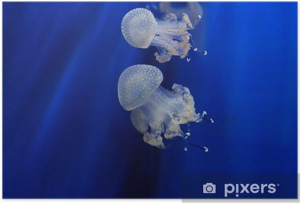 Plakát Zaražený - Vodní a mořský život
