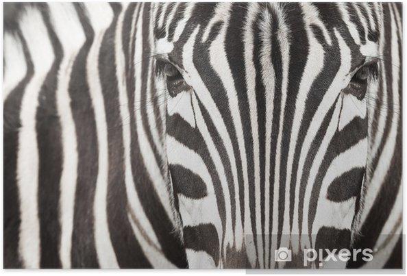 Plakat Zbliżenie głowy zebry i ciało z pięknym wzór w paski - Zebry