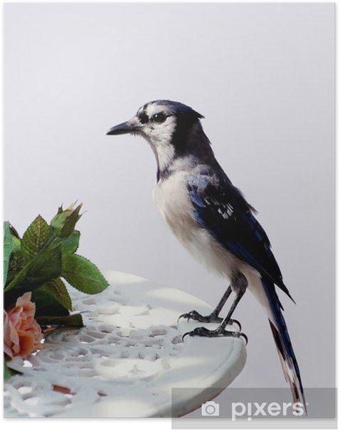 Plakat Zbliżenie z Blue Jay na stole na pokładzie wcześnie rano - Ptaki