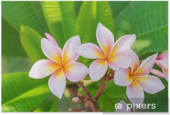 Plakát Zblízka keře - Květiny