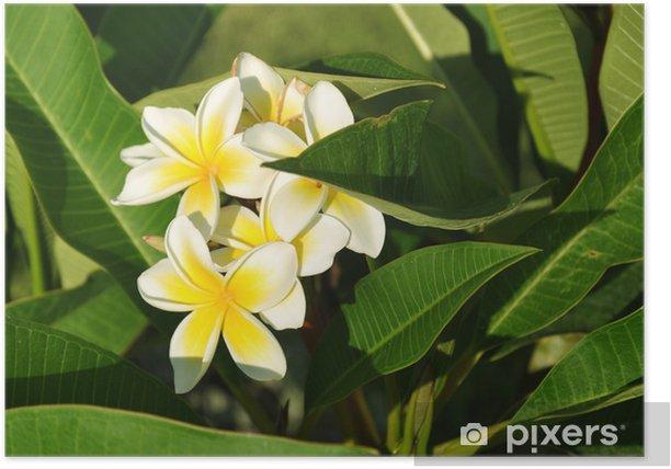 Plakat Zdjęcie rośliny - kwiat - Kwiaty