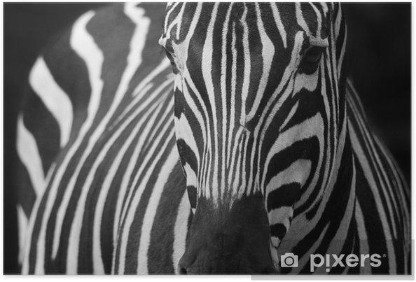 Plakat Zebra 2 - Tematy