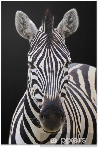 Plakat Zebra wyizolowanych na czarny - Tematy