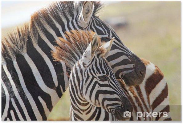 Plakat Zebra z matką dziecka - Tematy