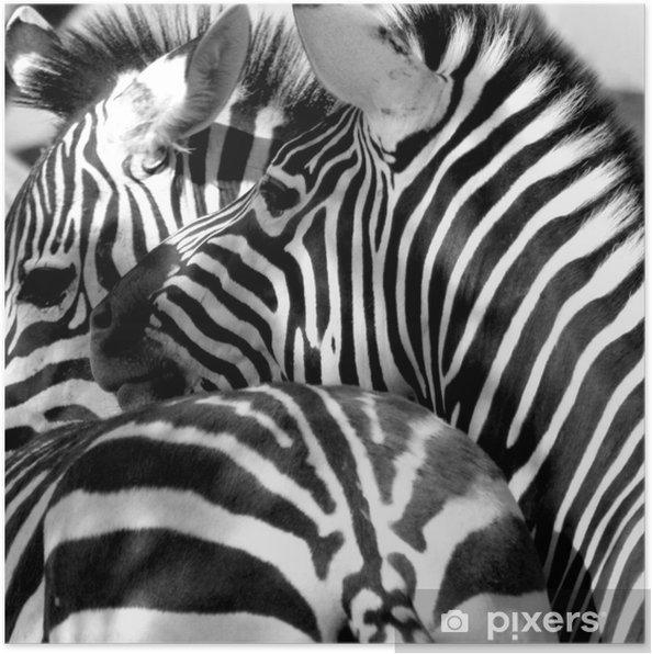 Plakat Zebra zapiekanka - Tematy