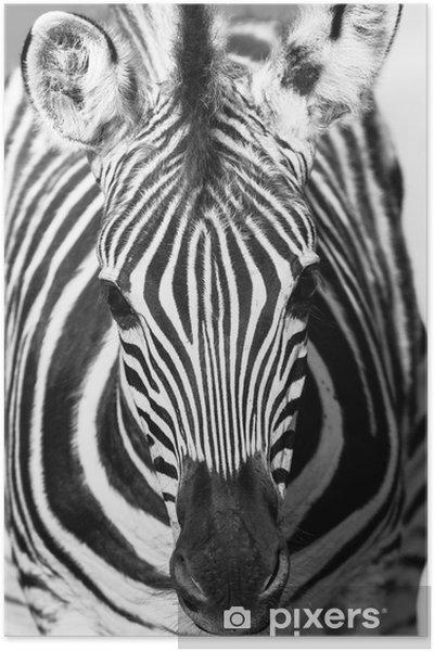 Plakat Zebra zwierzę portret głowy czarny biały - Tematy