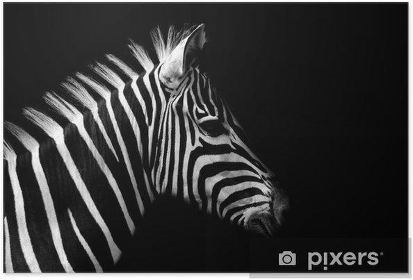 Plakat Zebra -