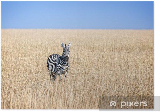 Plakat Zebra - Afryka