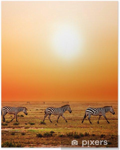 Plakat Zebry afrykańskiej sawanny stado na zachodzie słońca. safari w Serengeti - Tematy