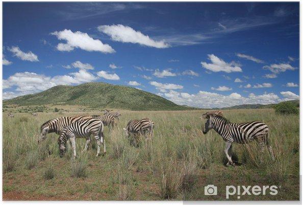 Plakát Zebry Parco Nazionale Pilanesberg sudafrica - Prázdniny