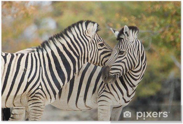 Plakat Zebry w czułości - Tematy