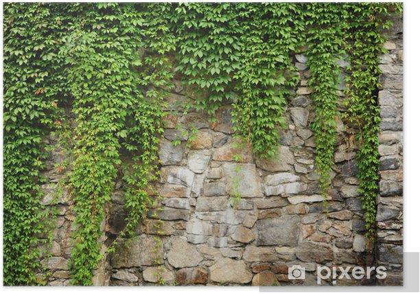 Plakát Zelená Ivy - Evropa