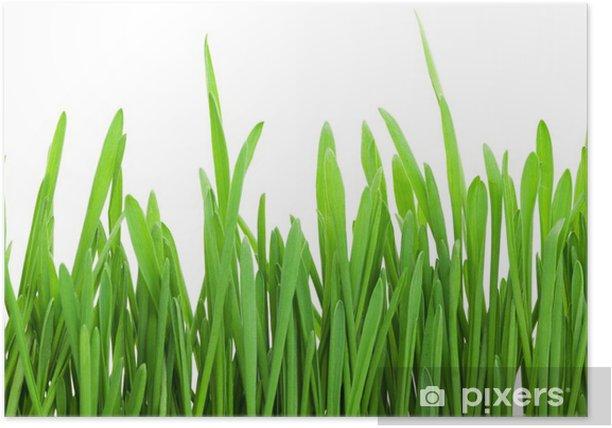 Plakát Zelená tráva - Roční období