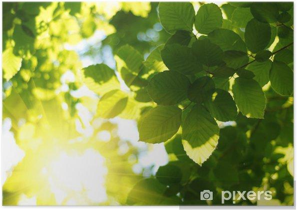 Plakát Zelené listy s Sun Ray - Témata