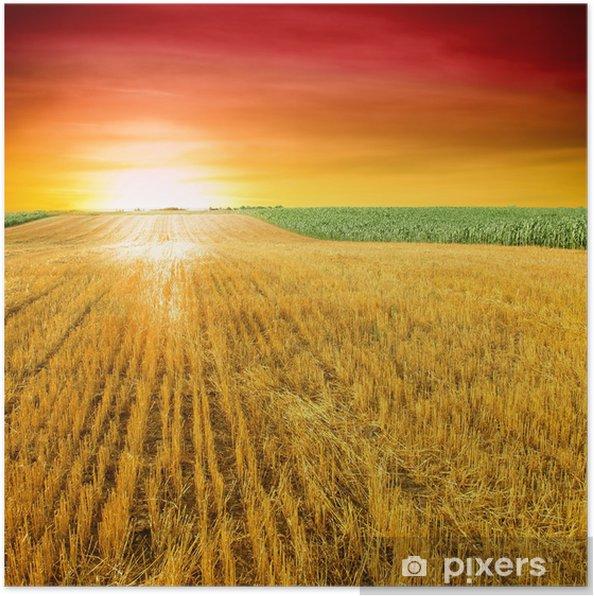 Plakát Zemědělství. Strniště pole po řezání obilí - Zemědělství