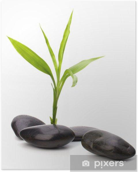 Plakát Zen oblázky cestu. Lázně a zdravotní koncepci. - Životní styl, péče o tělo a krása