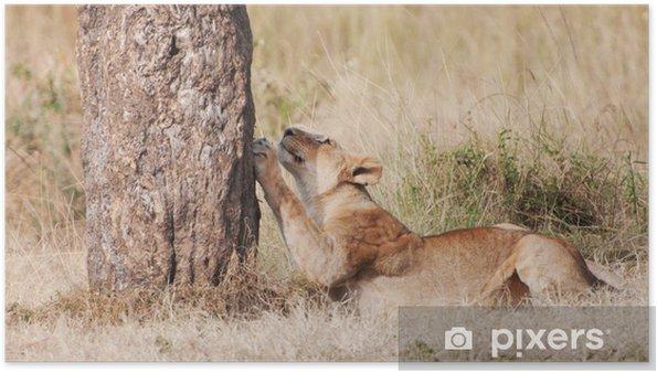 Plakát Žena lev ostření své drápy na kmen stromu - Savci