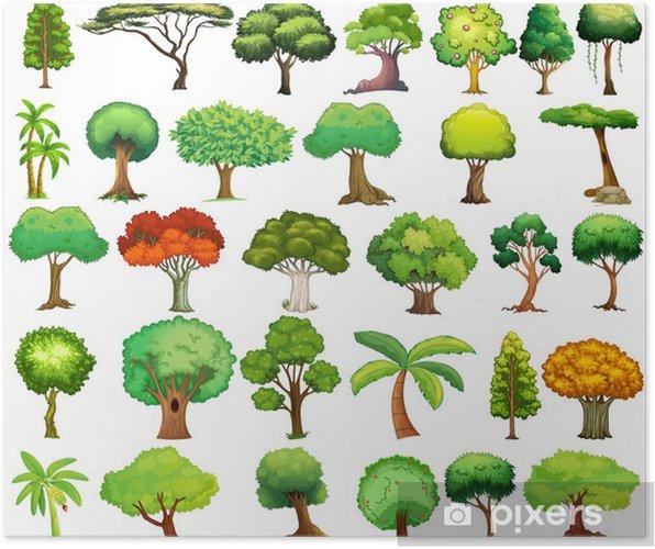 Plakat Zestaw drzew - Drzewa