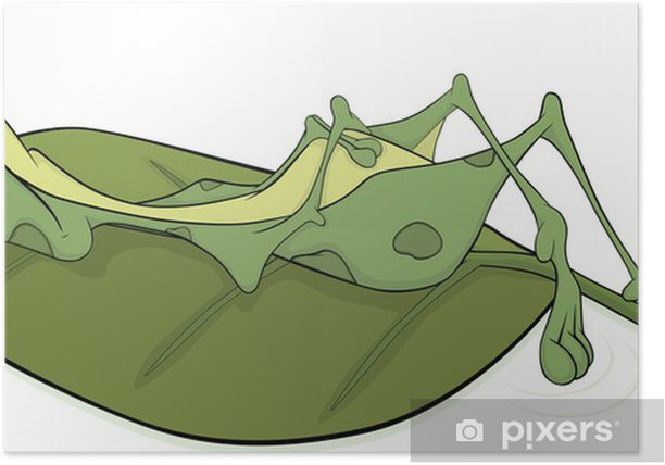 Plakat Zielona duża żaba. Rysunek - Inne Inne