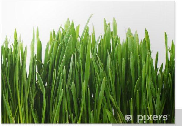 Plakat Zielona trawa na białym tle - Dom i ogród