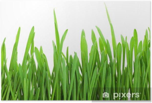 Plakat Zielona trawa - Pory roku