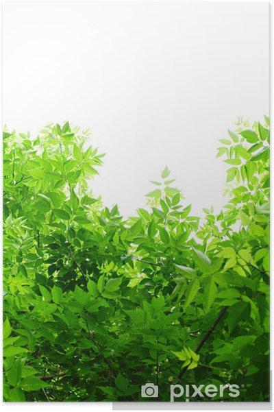 Plakat Zielone liście na białym tle. - Pory roku