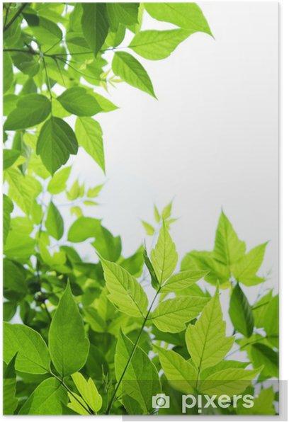 Plakat Zielone liście - Pory roku
