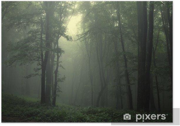 Plakat Zielony las po deszczu - Style