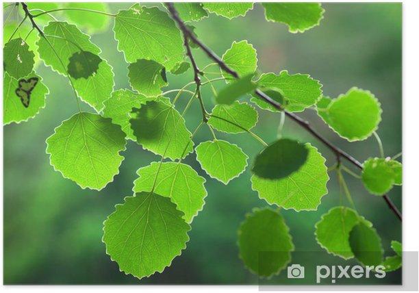 Plakat Zielony liść osiki - Pory roku
