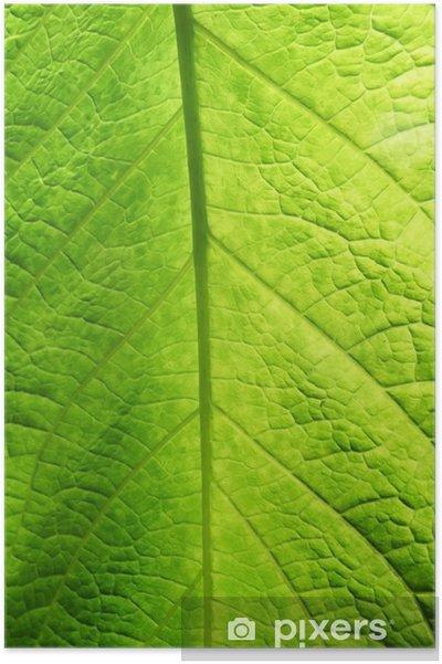 Plakat Zielony liść tekstury - Pory roku