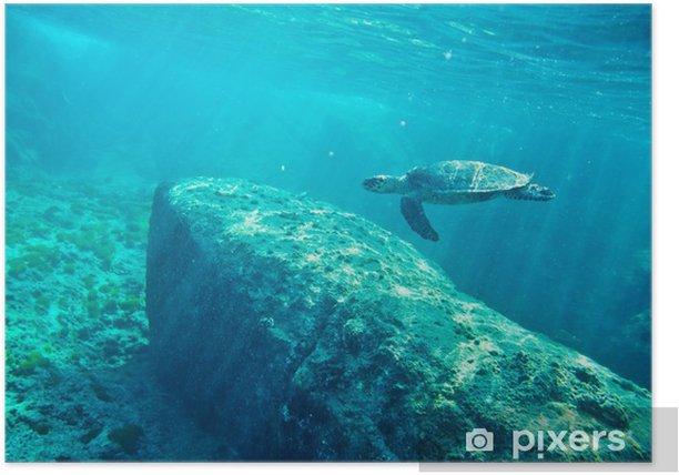 Plakat Zielony żółw morski. (Chelonia mydas) - Wakacje
