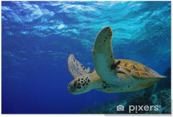 Plakat Zielony żółw morski pływanie wzdłuż tropikalnej rafie - Inne Inne