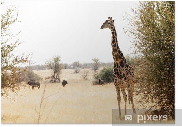 Plakát Žirafa - Témata