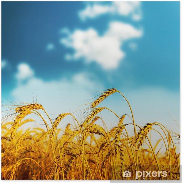 Plakát Zlatý sklizeň na západ slunce - Zemědělství
