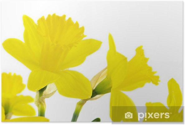 Plakát Žluté narcisy - Mezinárodní svátky