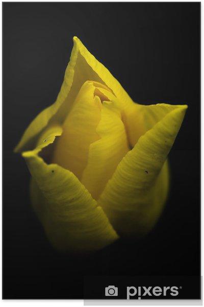 Plakát Žlutý tulipán - Květiny