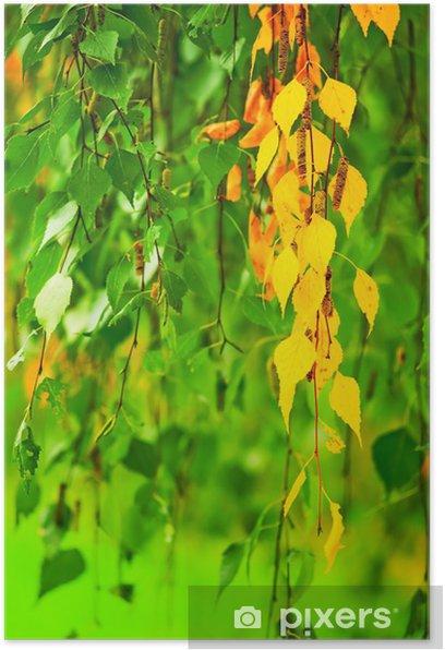 Plakat Żółknięcie liści brzozy - Pory roku