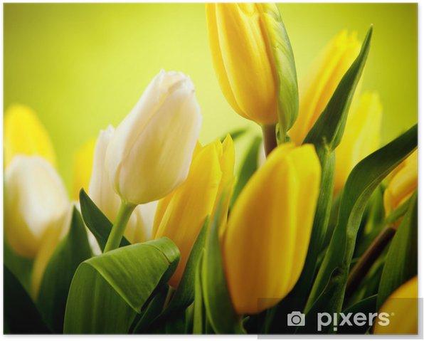 Plakat Żółte i białe kwiaty, tulipan z zielonej przestrzeni kopii - Tematy