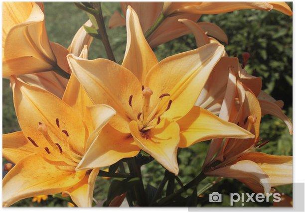 Plakat Żółte lilie w jasnych promieniach słońca - Kwiaty